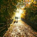 """<p>Soak up the last of the <a href=""""https://www.townandcountrymag.com/leisure/travel-guide/a10263833/fall-foliage-in-new-england/"""" rel=""""nofollow noopener"""" target=""""_blank"""" data-ylk=""""slk:fall foliage"""" class=""""link rapid-noclick-resp"""">fall foliage</a>, and take a Thanksgiving stroll. Whether it's just a walk around your neighborhood or a full-fledged hike, it'll feel good to get some fresh air. </p>"""