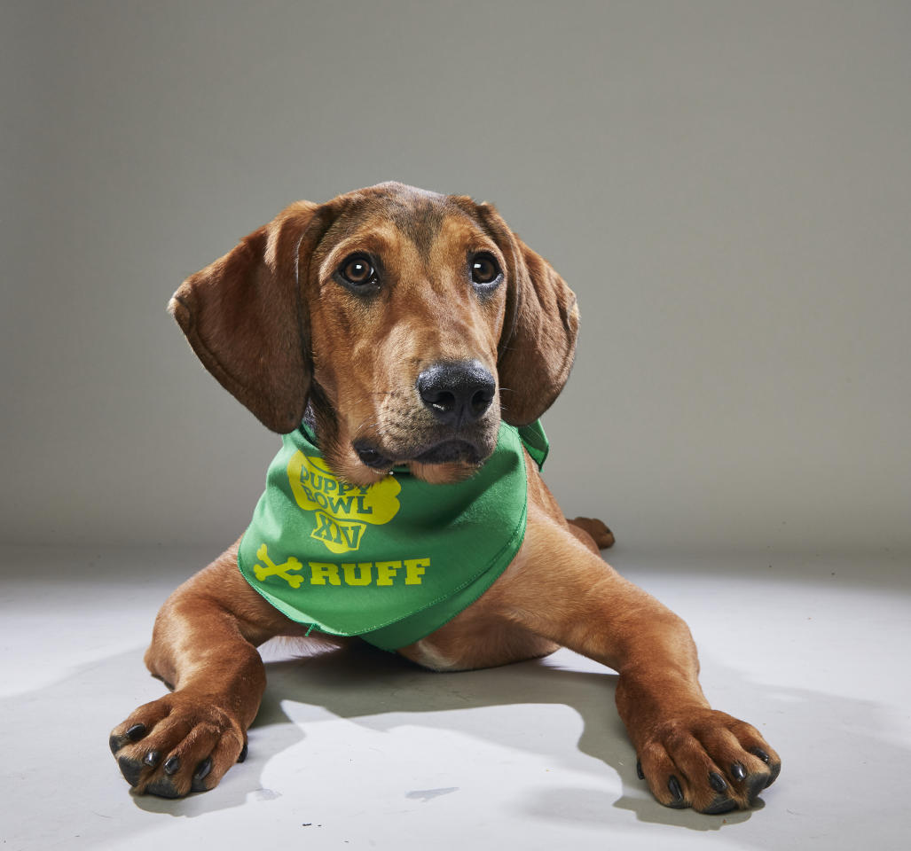 Team: Ruff<br /> From: Nashville Humane Association<br /> (Photo: Animal Planet)