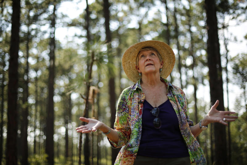 "Julie Moore, a fierce opponent of de-listing the red-cockaded woodpecker from the endangered species list, visits the bird's habitat in a long leaf pine forest at Fort Bragg in North Carolina on Tuesday, July 30, 2019. In the 1980s and 1990s, efforts to save the woodpecker and their trees set off a backlash among landowners who worried about interference on their private property. ""I've been run off the road. I've been shot at,"" says Moore, a former Fish and Wildlife Service woodpecker official. (AP Photo/Robert F. Bukaty)"