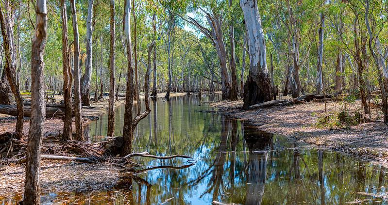 The Barmah-Millewa forest (pictured) is a Ramsar site, meaning it's a wetland of International Importance. Source: Flickr/Peter Lieverdink