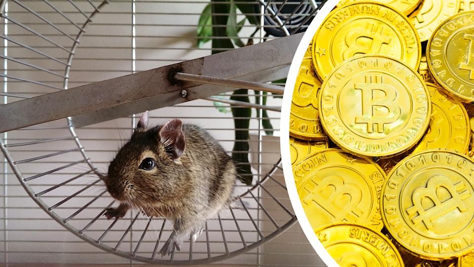 A hamster on a wheel and Bitcoin piled together.