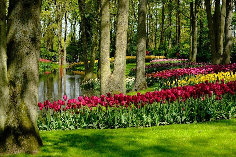 "<p>The <a href=""https://keukenhof.nl/en/"" rel=""nofollow noopener"" target=""_blank"" data-ylk=""slk:South Holland landmark"" class=""link rapid-noclick-resp"">South Holland landmark</a> contains an impressive 7 million flower bulbs planted across 79 acres of land, making it the largest flower garden in the world. The grounds were formerly a fruit and vegetable garden for the kitchen of Teylingen Castle before Keukenhof Castle was built in 1649. In 1949, a group of leading flower growers created a spring-flowering exhibit, establishing the beginning of the tulip gardens and spring park.<br></p>"
