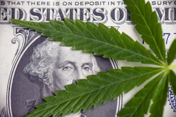 A cannabis leaf laid atop a one dollar bill, with George Washington's eyes peering through the leaves.