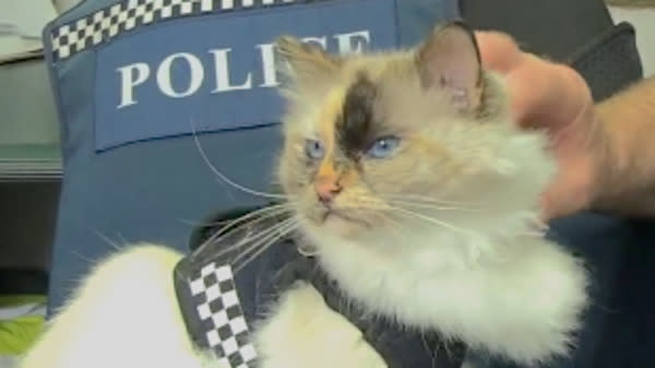 A cat in New Zealand dressed for the occasion when she pulled a shift alongside her police officer owner.
