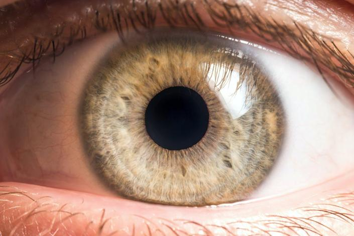 """<span class=""""caption"""">The eye has a collection of microbes living on the surface that keep it healthy. </span> <span class=""""attribution""""><a class=""""link rapid-noclick-resp"""" href=""""https://www.shutterstock.com/image-photo/human-eye-medical-detail-1345654691?src=3EN65aoLrSklI70CS0rGYw-1-0&studio=1"""" rel=""""nofollow noopener"""" target=""""_blank"""" data-ylk=""""slk:photoJS/Shutterstock.com"""">photoJS/Shutterstock.com</a></span>"""
