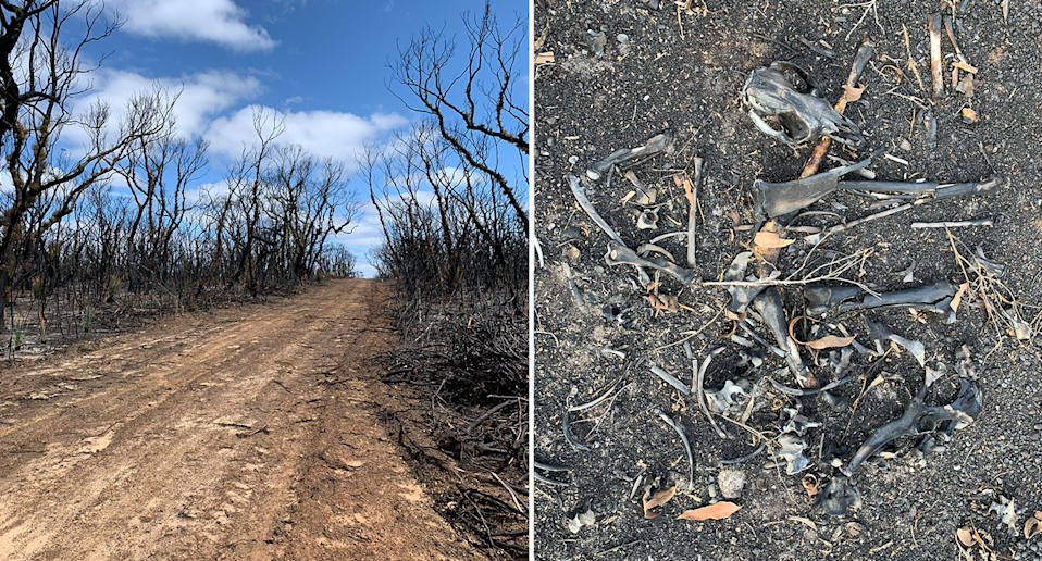 Split screen. Left - a burnt out forest against a blue sky. Right - burnt animal bones on the ground.