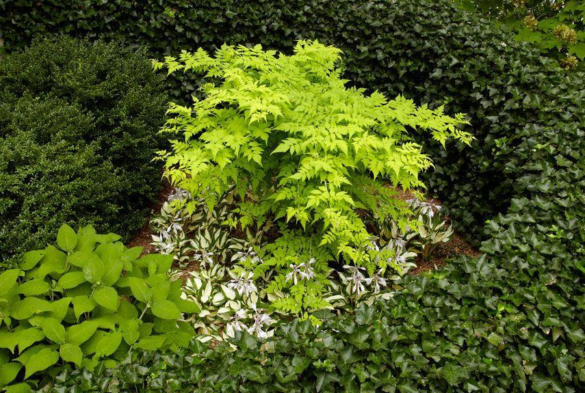 <p>With more foliage than flowers, a garden full of greenery is not only ultra low-maintenance, but also more bang for your buck. Petalless plants, like this ghost bramble, don't need deadheading and leaves last longer than briefly blooming blossoms. </p>
