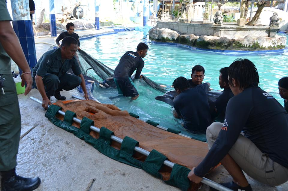 People lift Dewa the dolphin out of the hotel swimming pool.