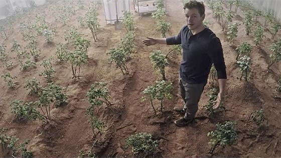 Scientists are about to eat radishes grown in Martian soil