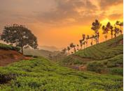 <p>This town in India's Kerala state sits at the intersection of three mountain streams. It's best known for its sweeping hills covered in tea plantations and verdant forests.</p>