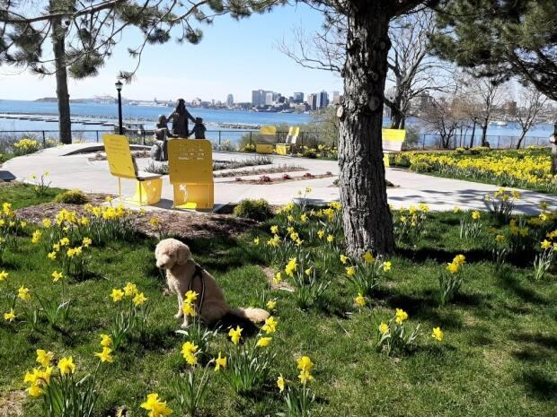 The garden is located at 94 Alderney Drive on the Dartmouth waterfront.