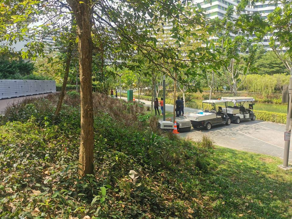 A wild boar was caught and put down in Punggol on Friday, 26 February 2021. (PHOTO: Sun Xueling)