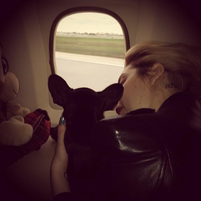 <p>Gaga introduced Asia to fans in 2014, quickly taking her on her first adventure. </p>