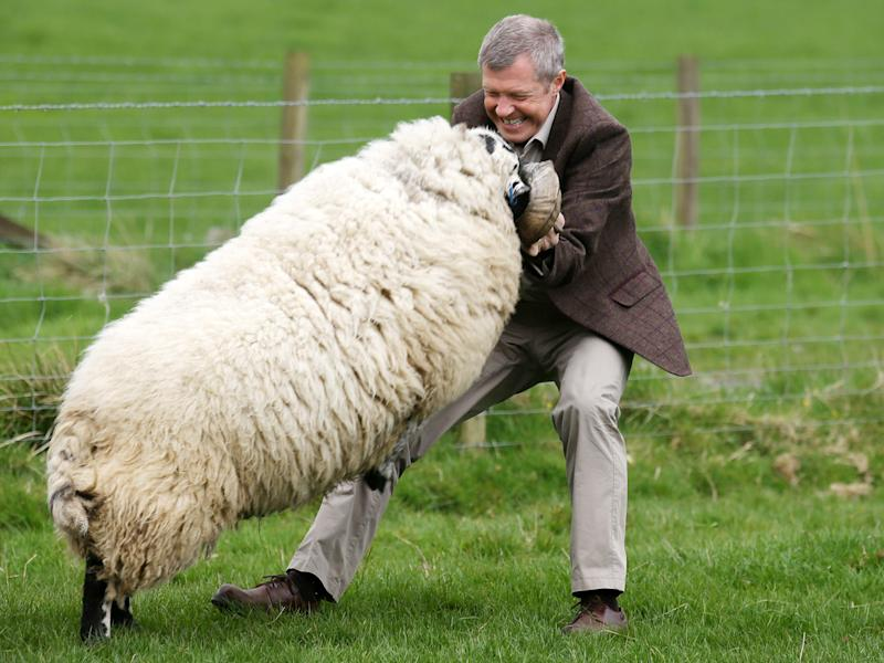 Scottish Liberal Democrat leader Willie Rennie appears to relish the fight with a ram: Andrew Milligan/PA Wire