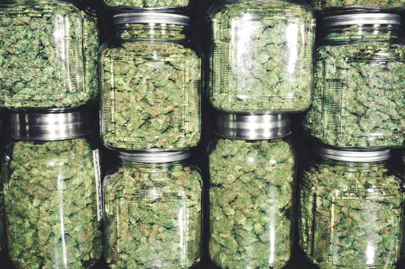 Lots of cannabis flower in jars.
