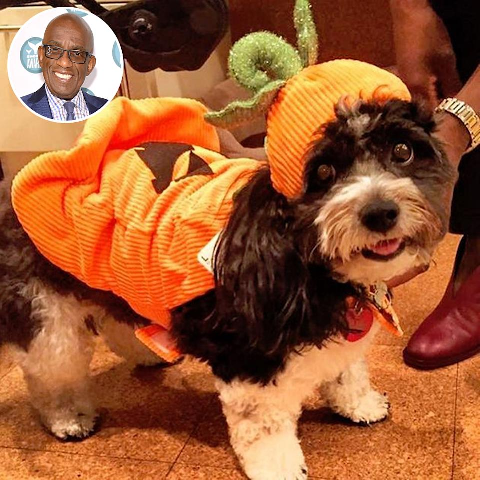 "<p>Aw! The <i>Today</i> co-host did a trial run of his pup in costume ahead of Halloween. ""My girl, Pepper, previewing her #halloween #costume,"" Roker shared. ""The only time I will approve of #pumpkin #spice."" (Photo: <a rel=""nofollow"" href=""https://www.instagram.com/p/BMC7t03jl0u/"">Instagram</a>/Getty Images) </p>"