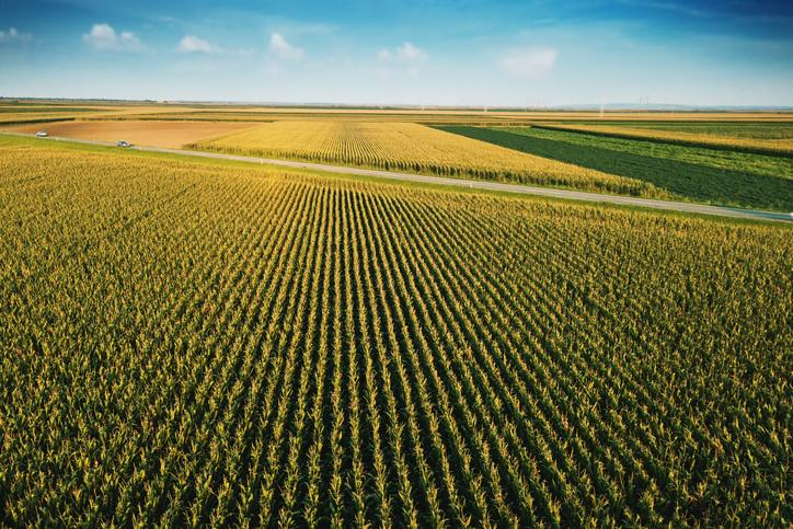 Aerial view of corn field.