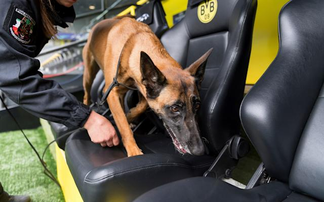 <span>A sniffer dog and its handler search the stadium in Dortmund ahead of Wednesday's match</span> <span>Credit: AP </span>