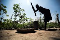 South Sudan has seen the price of certain cereals such as sorghum rise by as much as 1,000 percent in some states (AFP Photo/Albert Gonzalez Farran)
