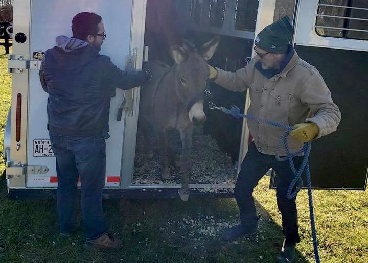 Jeffrey Dean Morgan, right, escorts Jack the donkey to his new home. The actor and his wife adopted Jack and his emu love, Diane. (Photo: Carolina Waterfowl Rescue/Facebook)