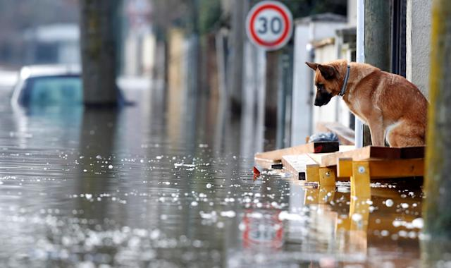<p>A dog is seen at the entrance of a house in the flooded residential area of Villeneuve-Saint-Georges, near Paris, France, Jan. 26, 2018. (Photo: Christian Hartmann/Reuters) </p>