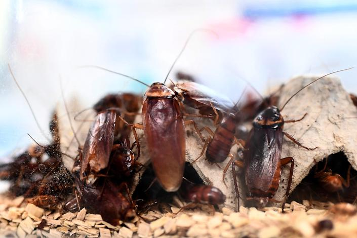 <p>Surveillance video captured Suncha Tinerva, of Queens, New York, trying to poison her husband's coffee with roach killer.</p> (AFP via Getty Images)