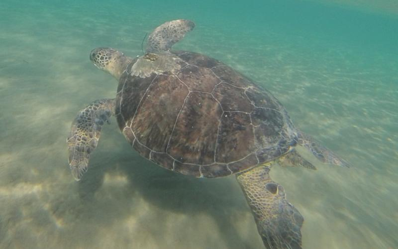 Turtles are fooled by plastic that resembles food - PA