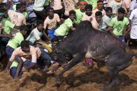 Facing a raging bull<br><br>Jallikattu is a festival that is well-known now for being the news. The Indian version of the Spanish bull-fighting festival is as dangerous as it is ancient, the practice being a crowd favorite for over a century. Special bulls are reared for this festival and given a special diet as well. Just before the festival begins, the bulls horns are sharpened and the prize is usually tied to it. The people who try to tackle the bull cannot have any weapons — just their bare hands to fight a frenzied bull.