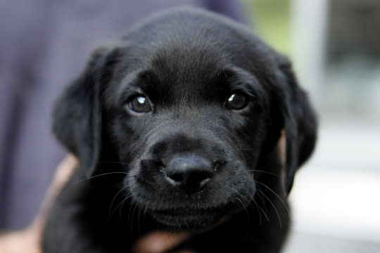 Ohio to make first-offense pet cruelty a felony with