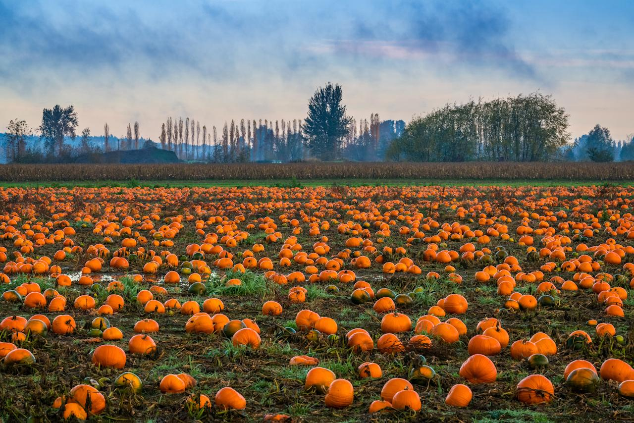 """<p>There's so much to do when fall finally rolls around&mdash;long walks outside in the crisp temperatures, <a title=""""Martha's Travels: Let Our Founder's Vacations Inspire Your Own"""" href=""""https://www.marthastewart.com/1540776/martha-stewart-vacations"""">weekend excursions to exciting destinations</a>, and plenty of sightseeing when the&nbsp;<a title=""""The Best Places to See Fall Foliage in the United States"""" href=""""https://www.marthastewart.com/1532405/best-places-see-fall-foliage-united-states"""">foliage is at its peak</a>. At the very top of everyone's list for late September and October, however, is finding <a title=""""Pumpkin Carving and Decorating Ideas"""" href=""""https://www.marthastewart.com/275573/pumpkin-carving-and-decorating-ideas"""">magical pumpkins to carve</a> with friends and family and setting up <a title=""""18 Halloween Home Decor Picks That'll Cast a Spell on You"""" href=""""https://www.marthastewart.com/1531767/halloween-home-decor-shop"""">unique seasonal d&eacute;cor</a>&nbsp;in the weeks leading up to Halloween. What better way to find a pumpkin than heading to a festival filled with food, fun, and local arts and crafts?</p><p>You'd be hard pressed to find a community that doesn't celebrate cooler temps <a title=""""Fall Harvest Decorating"""" href=""""https://www.marthastewart.com/275172/fall-harvest-decorating"""">with some sort of autumnal celebration</a>, but many suburban towns and coastal cities go all-out&nbsp;hosting festivals dedicated to all things fall, complete with <a title=""""5 Tips for Picking a Pumpkin That Will Last Through October"""" href=""""https://www.marthastewart.com/1505904/tips-for-picking-pumpkin-last-through-october"""">pumpkin patches that are ripe for the picking</a>. Whether you have been traveling to the same pumpkin patch for decades or <a title=""""10 Halloween Games to Play for Spooktacular Fun"""" href=""""https://www.marthastewart.com/274488/halloween-games"""">if you're looking to start a new tradition this year</a>, we've rounded up the best pumpkin festivals wher"""