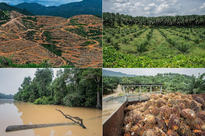 Left top: A durian plantation in Raub, on the outskirts of Kuala Lumpur. Soaring demand for durians in China is being blamed for a new wave of deforestation in Malaysia.&nbsp;<br> Right top: A palm oil plantation encroaches on a wildlife reserve in Sabah, Malaysia. <br> Left bottom: The Kinabatangan River flows through a wildlife reserve in Sabah, Malaysia. The overuse of pesticides during the heavy equatorial rains creates a deadly runoff into the fragile river and its tributaries. <br> Right bottom: A palm oil plantation and factory in Sabah, Malaysia. (Photo: Getty Images)