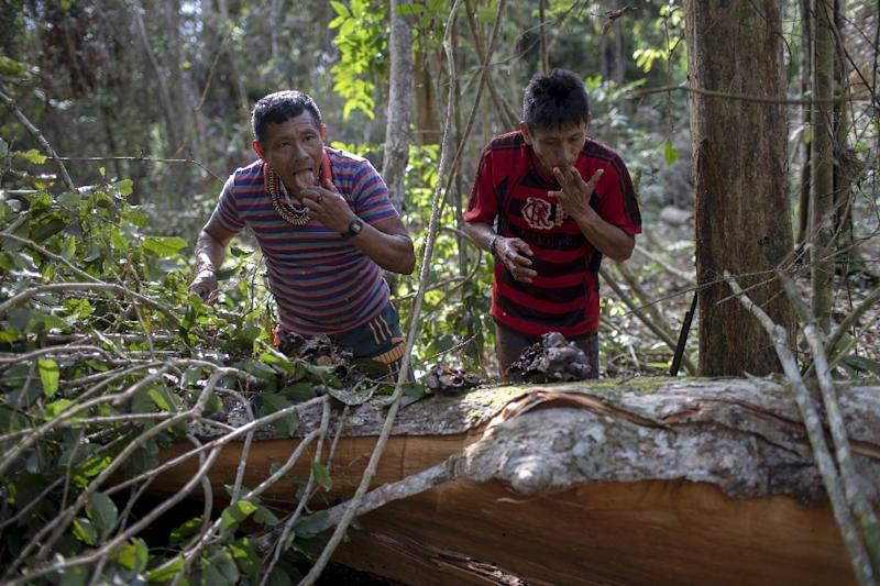 Arara indigenous chief Tatji Arara (R), and another tribe member eat honey found in a tree, which was ilegally cut down, as they patrol their ancestral lands (AFP Photo/Mauro Pimentel)