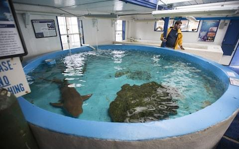 Cypress Rudloe waits to evacuate his last remaining nurse shark at the Gulf Specimen Marine Lab, across the street from Dickerson Bay, ahead of the arrival of Hurricane Irma September 10, 2017 in Panacea, Florida. Gulf Specimen is a marine teaching lab and has evacuated two sharks and a loggerhead sea turtle to Atlanta. - Credit: Getty
