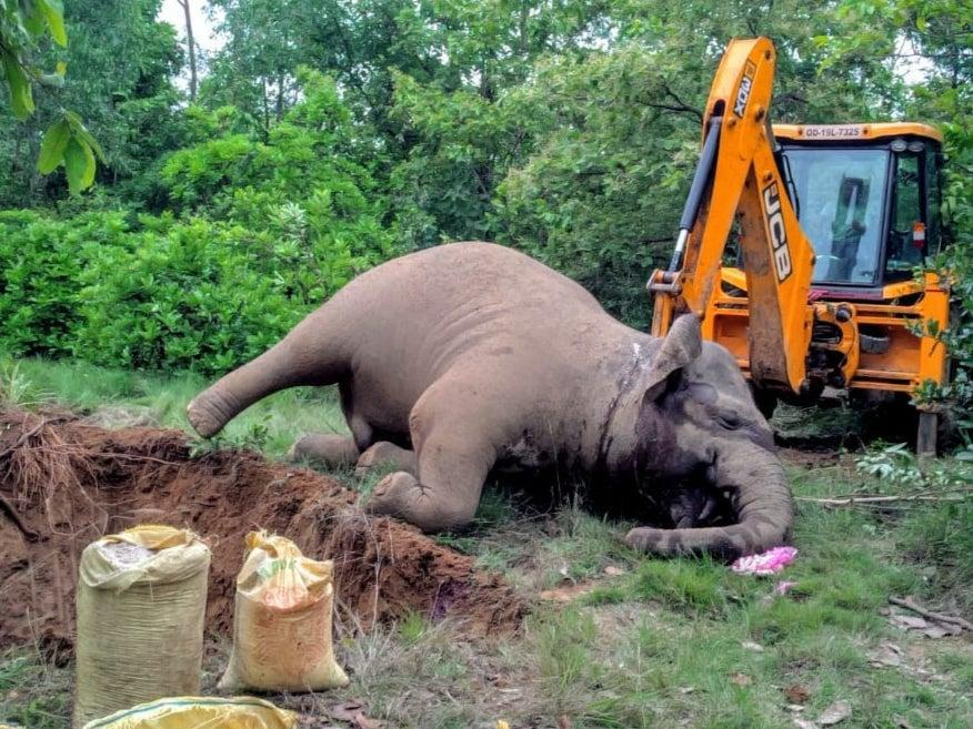 An elephant burial: 'A silent catastrophe is unfolding across India,' says Sangita Iyer (Biswajit Mohanty)