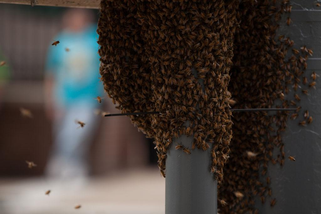 Pittsburgh, PA - The Wanders and their friends are preparing for a time when they can no longer wander in the park because of bees.