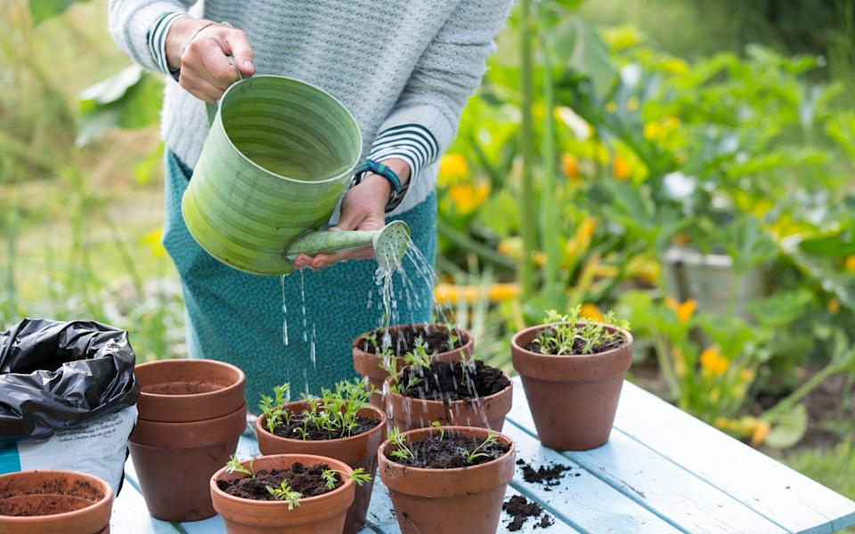 peat natural areas plants flowers environment concern gardening alternatives