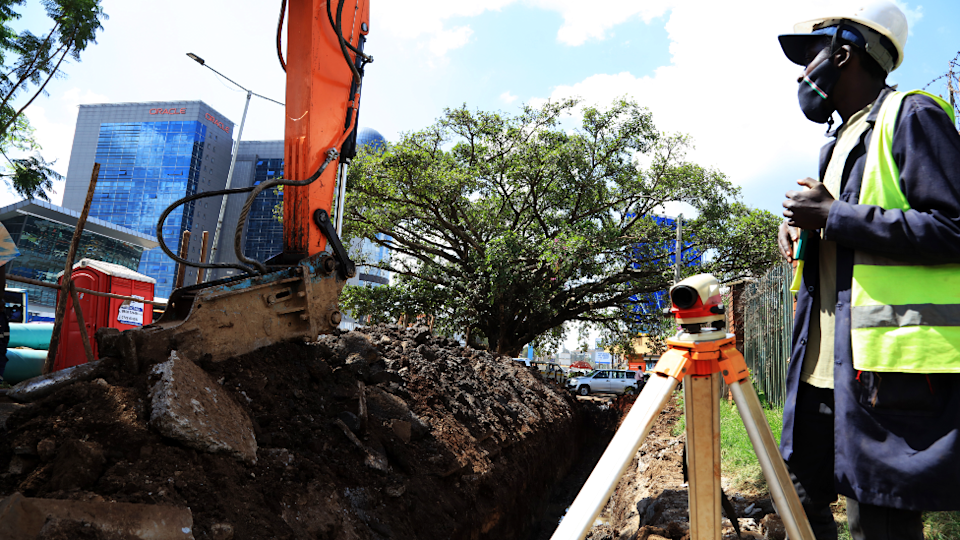 A trench being built around the fig tree in Nairobi, Kenya