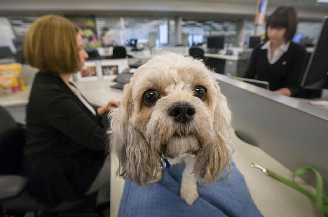 """Bring your dog to work. Research suggests having Fido in the office can <a href=""""http://www.npr.org/blogs/health/2012/03/30/149684409/take-your-dog-to-the-office-and-stress-less"""" rel=""""nofollow noopener"""" target=""""_blank"""" data-ylk=""""slk:lower stress levels throughout the day"""" class=""""link rapid-noclick-resp"""">lower stress levels throughout the day</a>."""