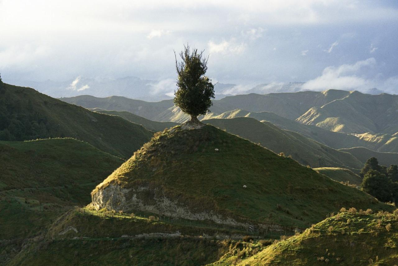 <p>A lone tree stands upon a hilltop in Wanganui, New Zealand // 1996</p>