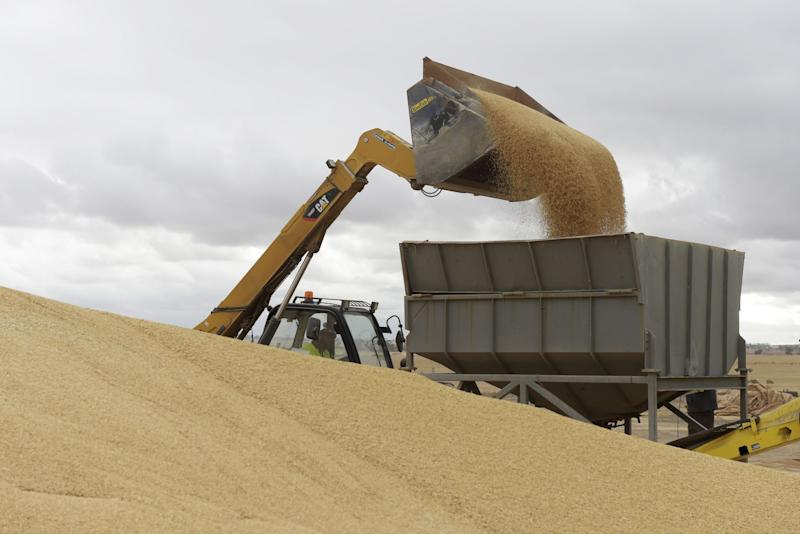 Barley Blow to Australian Farmers After China Slap