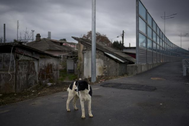 In this photo taken on Wednesday, Nov., 27, 2013, a dog walks on the pavement separating a federal house and the 5a Akatsiy street's house in the village of Vesyoloye outside Sochi, Russia. As the Winter Games are getting closer, many Sochi residents are complaining that their living conditions only got worse and that authorities are deaf to their grievances. (AP Photo/Alexander Zemlianichenko)