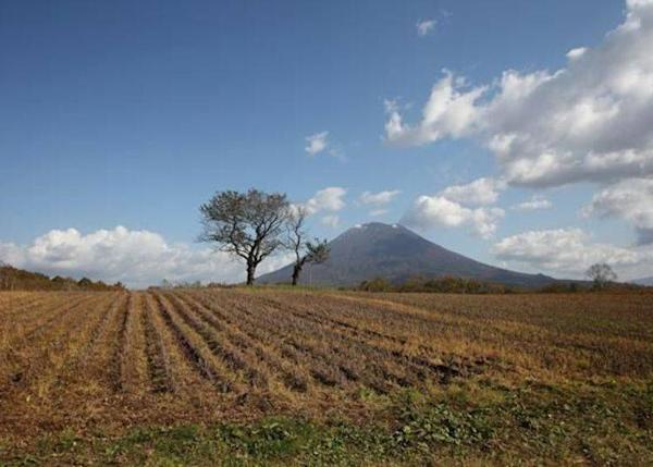 """▲A picture of the big and small cherry trees from a road. (Not allowed to get into the fields due to the private property) It takes about 10 minutes by car from """"Michi-no-Eki Niseko View Plaza"""""""
