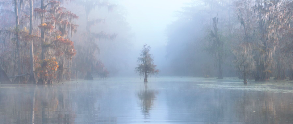 <p>A small, solitary tree appears through the mist in the middle of Lake Martin, Louisiana, USA. (Robert Marchegiani/Italy) </p>