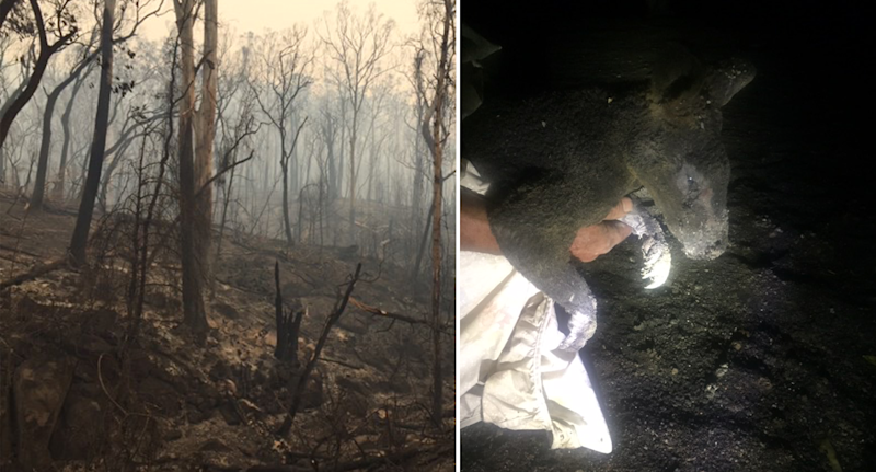 Burnt out bushland on Ms Tilling's Cobargo property, and right an injured kangaroo is rescued. Source: Supplied