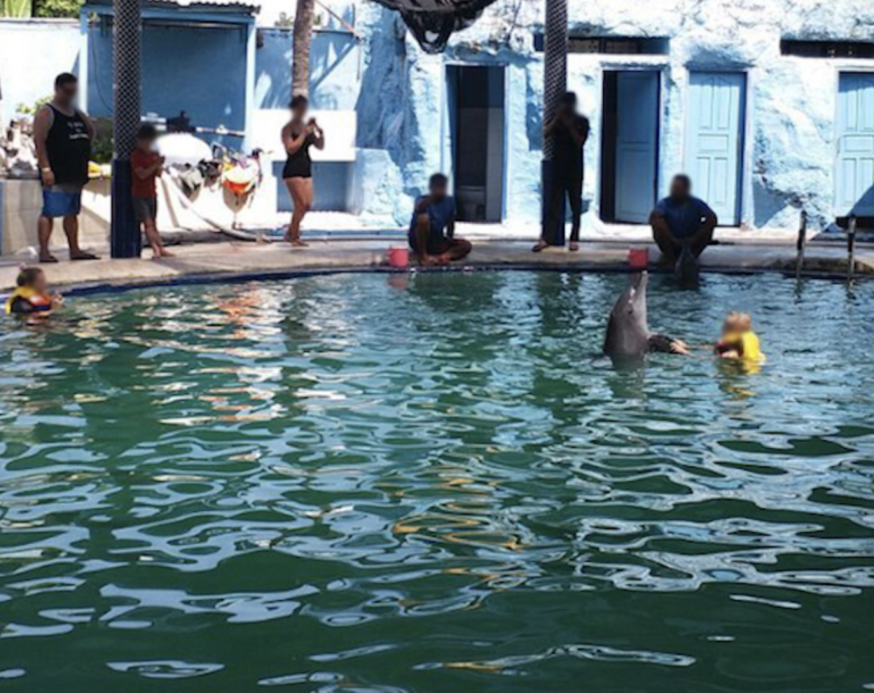 Children play with a dolphin inside a swimming pool as tourists take photos at the Melka Excelsior Hotel, Bali.