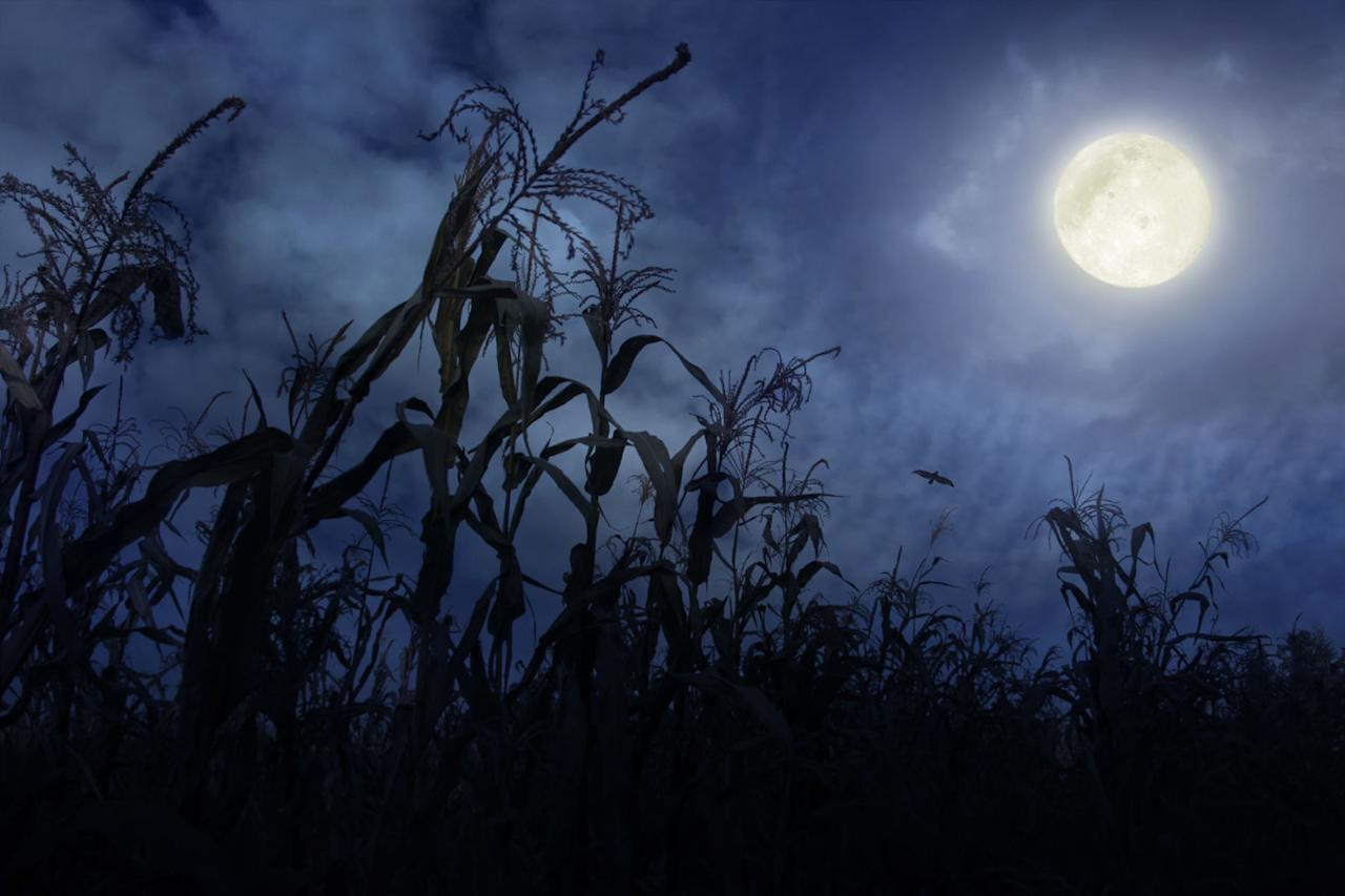 <p>We don't recommend reading about these spooky backwoods hauntings in the dark.<span></span></p>