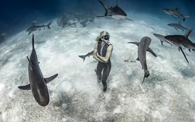 Underwater view of female free diver standing on seabed surrounded by reef sharks, Bahamas - Getty Images Contributor