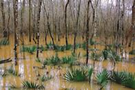 """<p><a href=""""https://www.nps.gov/cong/index.htm"""" rel=""""nofollow noopener"""" target=""""_blank"""" data-ylk=""""slk:Congaree National Park"""" class=""""link rapid-noclick-resp""""><strong>Congaree National Park </strong></a></p><p>This swampy and marshy landscape is filled with hardwood trees that grow alongside cypress trees (keep an eye out for the cypress knees jutting out of the ground). You'll walk on a raised walkway through this diverse and largely untouched forest. </p>"""