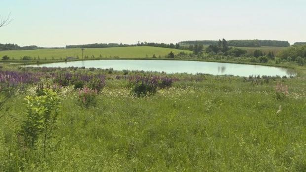 Many farmers say irrigation ponds are crucial for their crops, especially in hot, dry weather.