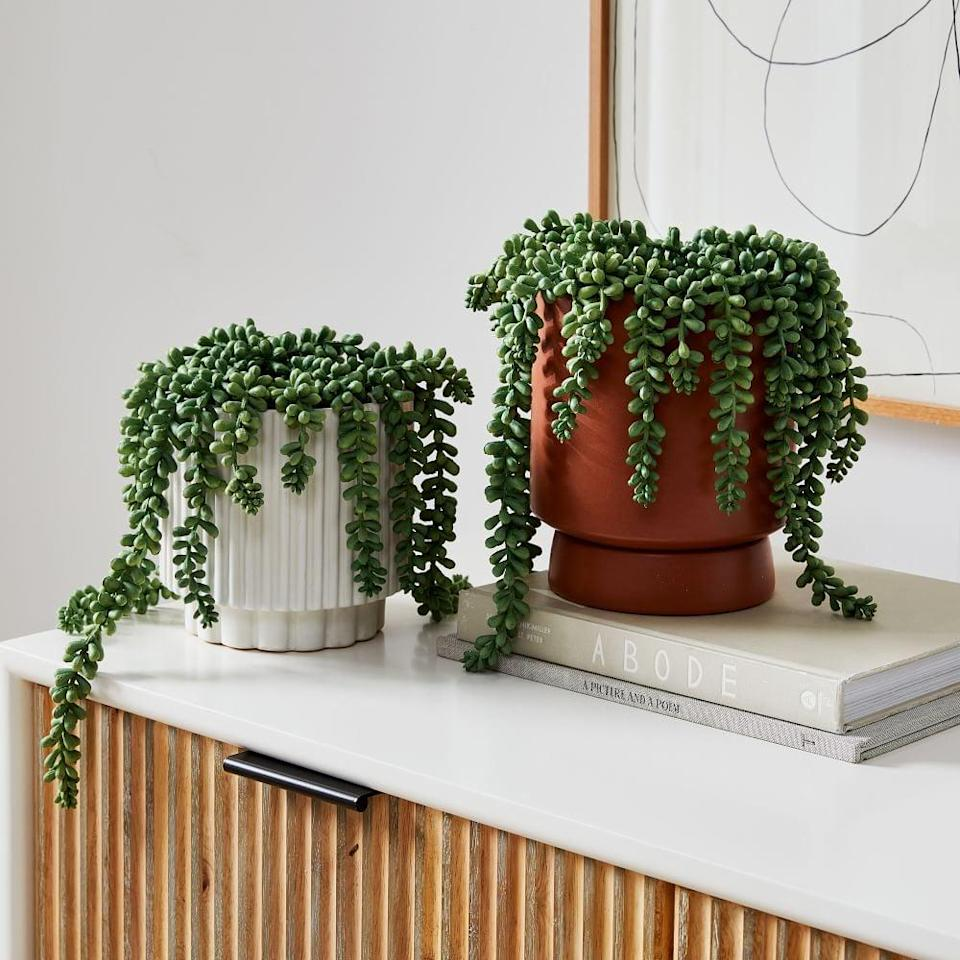 <p>This <span>Faux Potted Donkey Tail Plant</span> ($30 - $50) will add texture to any room.</p>